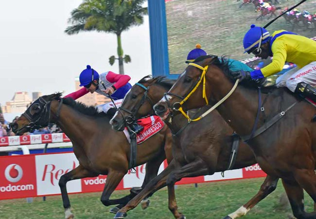 Horses racing at the Durban July Handicap